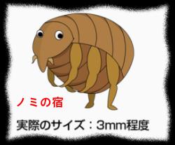 Contimg_flea02111111